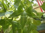 Vibrant Leaf, Leaf, HD Leaf, 3 Point Leaf, Bright Green Leaf